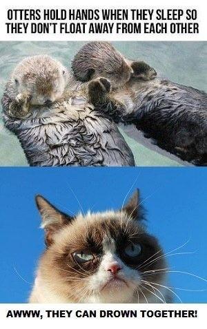 Grumpy Cat hates otters