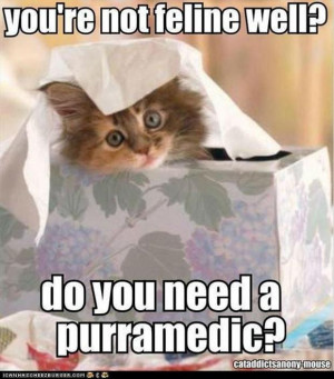 lol-cats-funny-sick-pictures