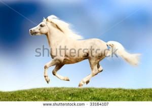 Palomino Horse Galloping Palomino horse galloping - stock photo. save ...