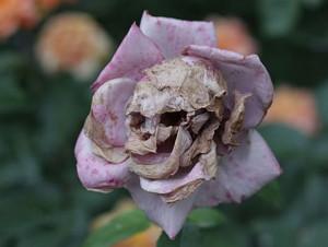 Funny photos funny flower skull fall Halloween