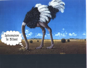 ostrich with head in the sand Pictures, Images and Photos