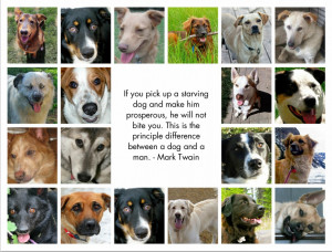 Rescue Animal Sayings . They also have a small cat rescue centre. And ...