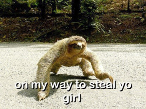 funny sloth pictures