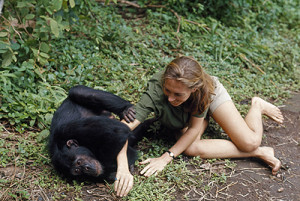 Photos of Jane Goodall interacting with chimpanzees in the wild ...