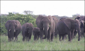passenger train killed five elephants when it ploughed into a herd ...