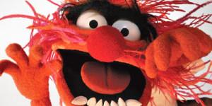 Animal Muppet Face