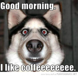 crazy eyes dog animal good morning like coffee husky funny pics ...