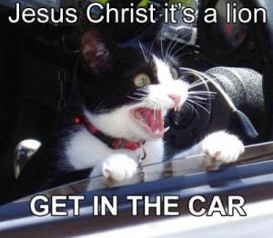 Funny Cats Quote - cats Photo