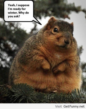 ... winter - Funny Pictures, Funny Quotes, Funny Memes, Funny Pics, Fai