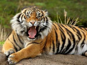 Beautiful Wild animals desktop wallpapers, photography , latest, cool ...
