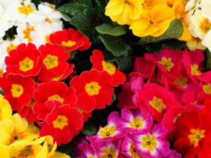 Inspiring Quotes About Spring Flowers