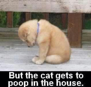 But The Cat Gets To Poop In The House…