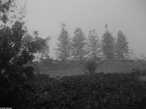 Rainy Days Facebook Day...