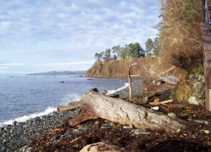 Large drift log being buried by cobble beach near Sooke, BC