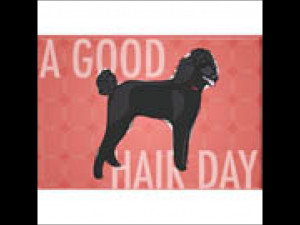 Poodle A Good Hair Day Refrigerator Magnet