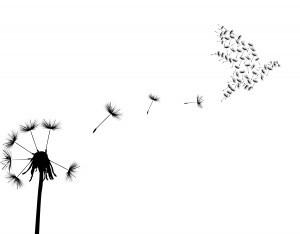 Dandelion tattoo turning into birds