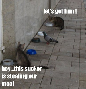 of cats fighting cat fight pictures cat pictures fighting pictures cat ...