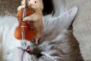 Funny mouse cat interaction | funny-pics.co