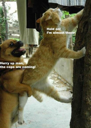 Attack Of The Funny Animals – 29 Pics