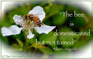 BEE QUOTE WITH PICTURE