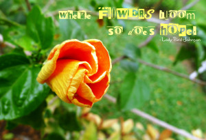 """Flowers Bloom So Does Hope """" - Lady Bird Johnson ~ Nature Quote"""