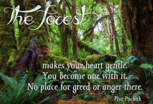 The forest makes your heart gentle You become one with it No place