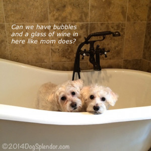 Displaying (18) Gallery Images For Senior Dogs Quotes...