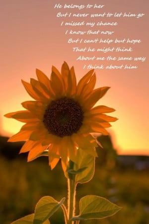 sunflower with insect near sunflower sayings hi sunflower graphic ...