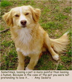 Grief quotes about dogs,sometimes loosing a pet is more painful than ...