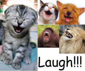 we thought of the different ways to make someone laugh