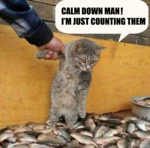 Tags: calm down , fish , fishes , funny cat pics