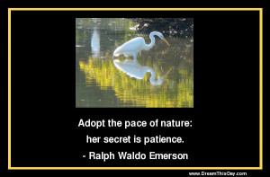 Adopt the pace of nature: her secret is patience.
