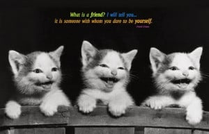Funny-Cats-with-Friendship-Quotes-and-Sayings-Images-for-Teenage-Girls ...