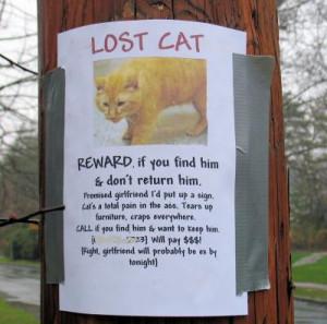 Cat Quotes Graphics
