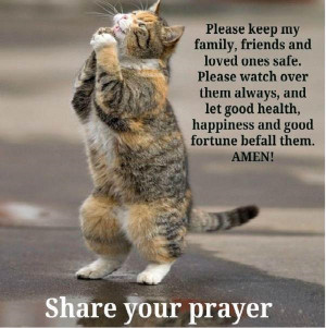 Funny Cat Prayersaying Quotes Image
