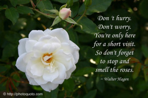 ... Visit, So Don't Forget To Stop And Smell The Roses - Flower Quote