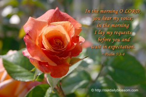 In the morning O LORD, you hear my voice; in the morning I lay my ...