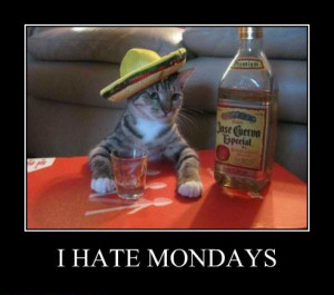 more drunk cats i hate mondays i hate it too funny quotes