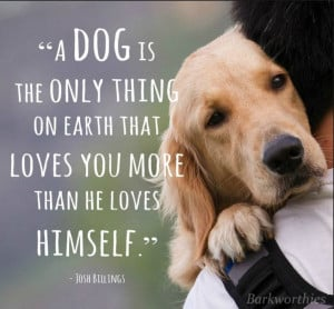 Dogs love us unconditionally