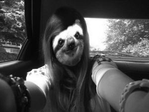 Funny Gif Sloth Eating Carrots