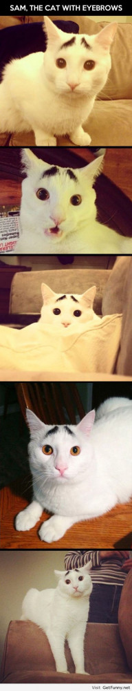 Cats eyebrows - Funny Pictures, Funny Quotes, Funny Memes, Funny Pics ...