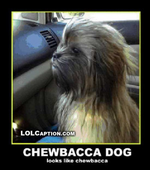 funny animal pictures quotes : funny dog pictures with words