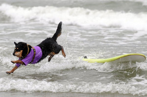 Funny Surfing (39)