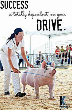 ... Pixel, Pigs Show Quotes, Show Pigs Quotes, Pigs Livestock Show Jeans