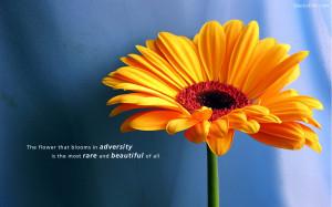 Beautiful Quotes Desktop Background