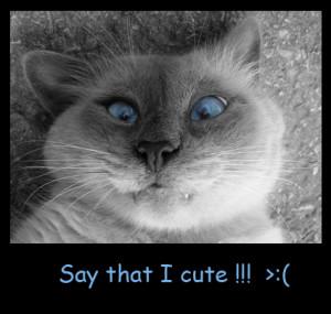 Say that I cute !!!
