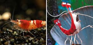 Real Fish Versus Finding Nemo Fish