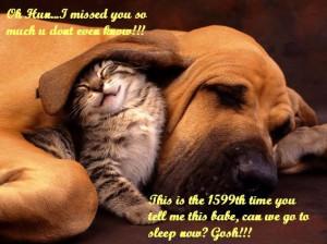 sleeping kittens sleeping puppies if impetuous puppy threatens cute ...