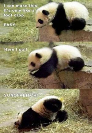 animals, cute, funny, panda