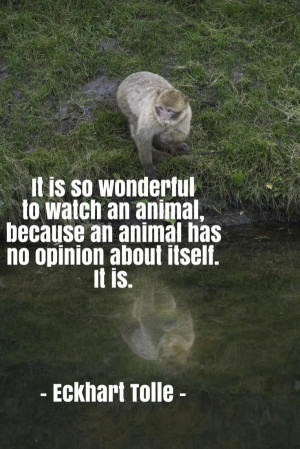 Eckhart tolle quotes, best, wisdom, sayings, animals